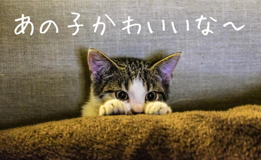 日本で台湾人とエッチしたいなら、出会い系が最も簡単でオススメです